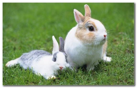 Image European Rabbit Rabbit Moustache Rabits And Hares Grasses