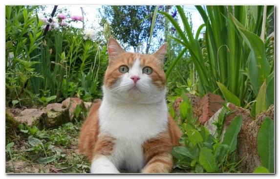 Image European Shorthair Plant Small To Medium Sized Cats Fauna Grass Family