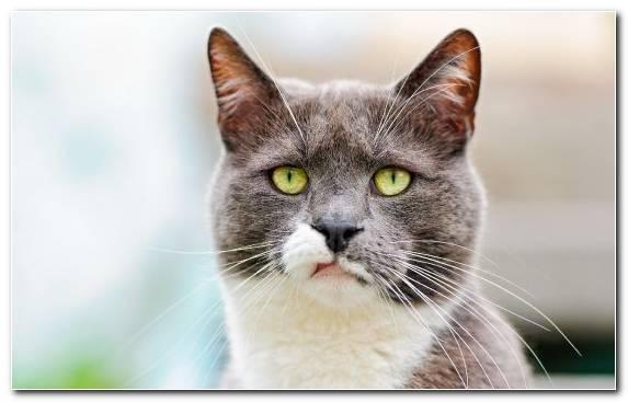 Image Eye Cat Communication Moustache Snout Cat Food