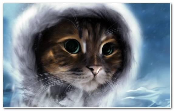 Image Face Kitten Snout Sky Moustache
