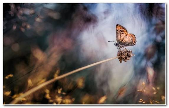 Image Facebook Prayer Leaf Moths And Butterflies Butterfly