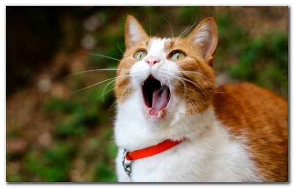 Image facial expression snout african wildcat fauna kitten