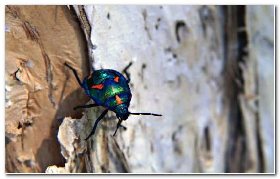 Image Fauna Arthropod Invertebrates Insect Macro Photography