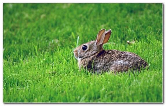 Image Fauna Baby Bunnies Cuteness Hare Terrestrial Animal