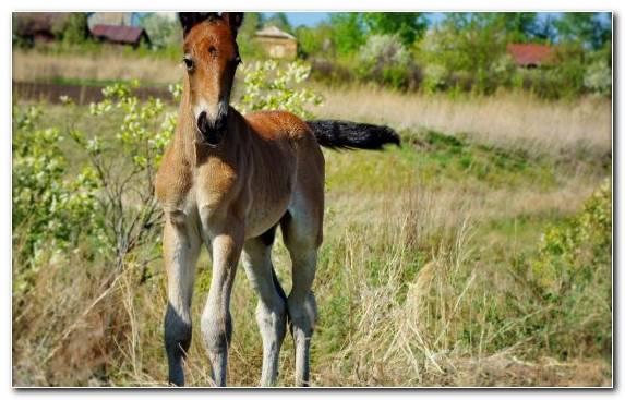 Image Fauna Foal Colt Mane Stallion