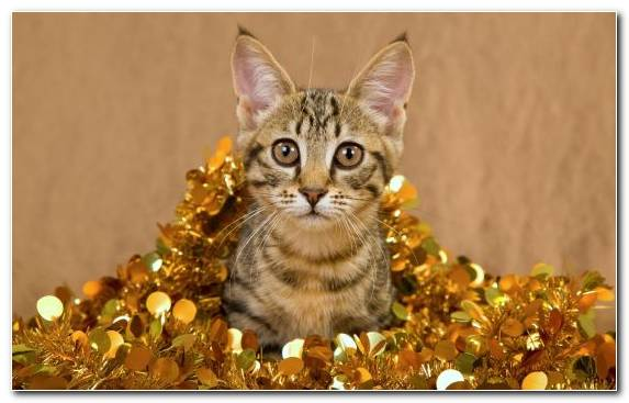 Image Fauna Mammal Kitten Animal Felidae