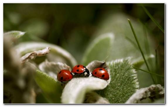 Image Fauna Pest Insect Grasses Invertebrates
