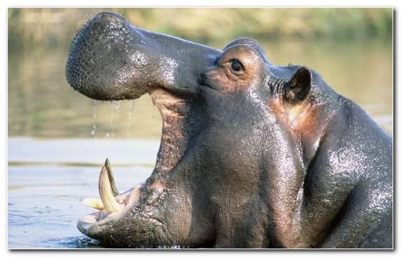 Image Fauna Terrestrial Animal Rhinoceros Horn Mammal