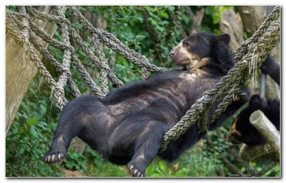 Image fauna wilderness wildlife terrestrial animal grizzly bear
