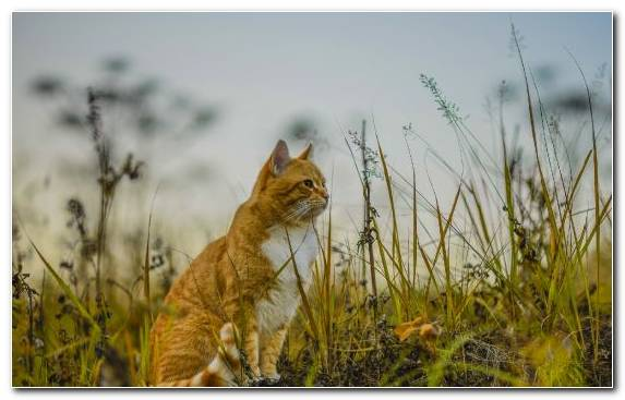 Image Fauna Wildlife Mammal Small To Medium Sized Cats Ecosystem