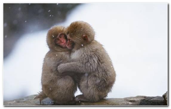 Image Fauna Wildlife Snout Mammal Fur