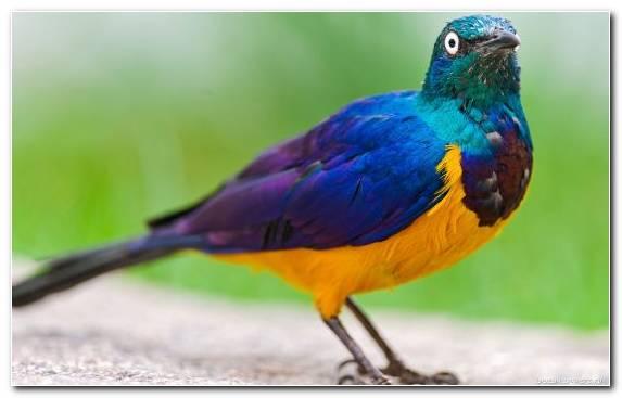 Image feather bird wildlife pierrot beak