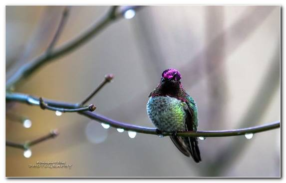 Image Feather Hummingbird Branch Pollinator Wildlife