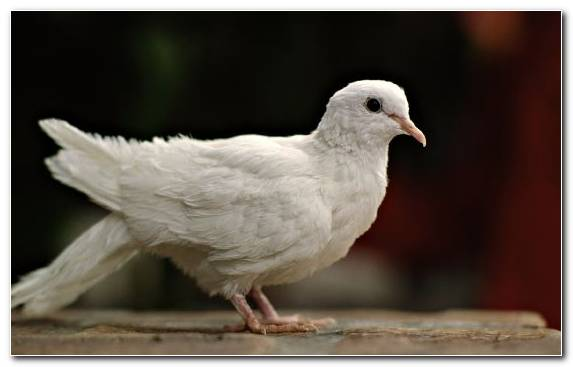 Image Feather Pierrot Dog Cuteness Bird
