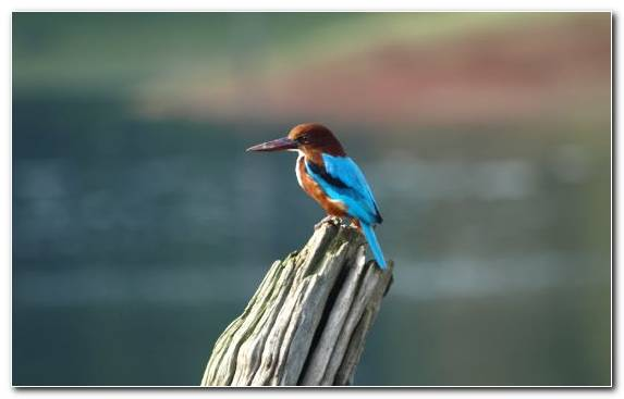 Image Feather Wing Coraciiformes Kingfisher Beak