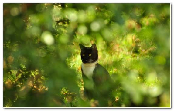 Image felidae kitten wildcat leaves tree
