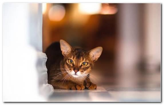 Image Felidae Moustache Snout Cat Animal