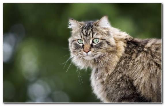 Image Felidae Snout Cat Sphynx Cat Moustache