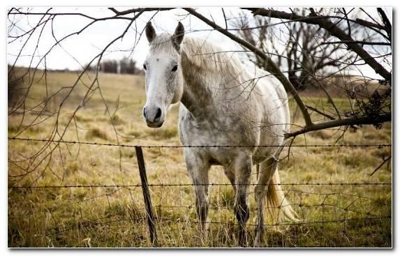 Image Fence Mane Pasture Grasses Horse