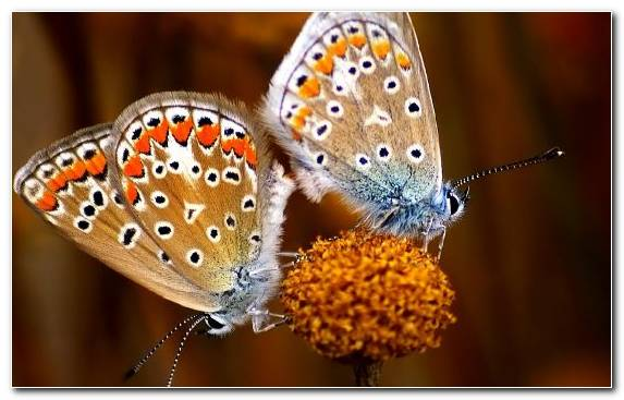 Image Film Pollinator Arthropod Android Brush Footed Butterfly