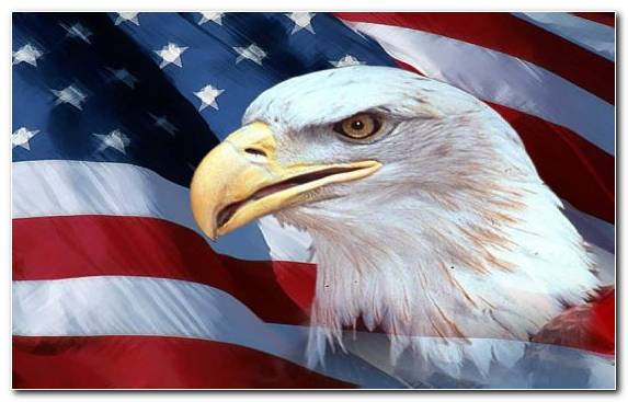 Image Flag Of The United States Eagle Bird Bald Eagle Accipitriformes