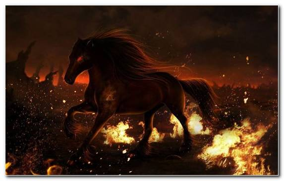 Image flame horses fire darkness bonfire