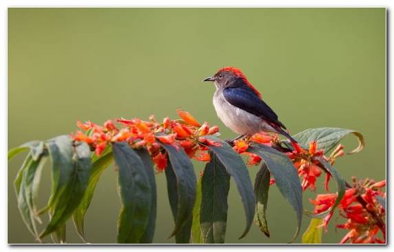 Image Flora Bird Old World Flycatcher Perching Bird Quiz
