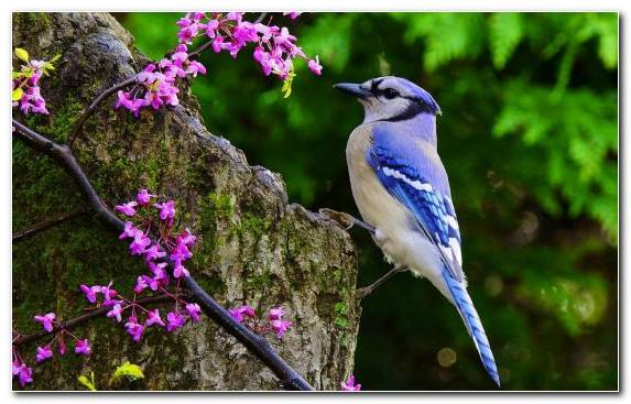 Image Flora Blue Jay Animal Flower Wildlife