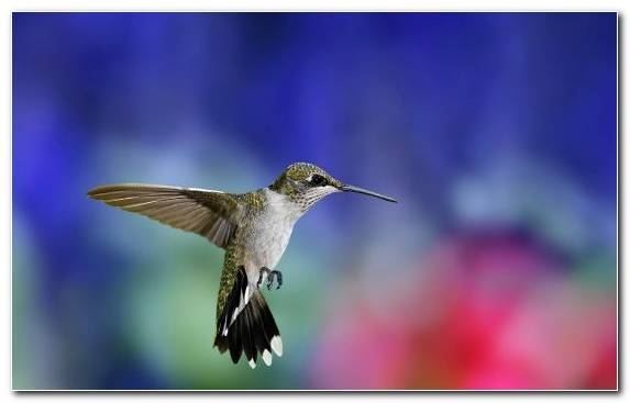 Image Flora Morning Hummingbird Wing Pollinator