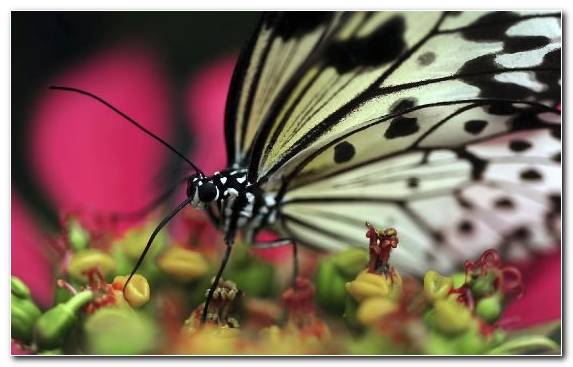 Image flora moths and butterflies brush footed butterfly pieridae butterfly