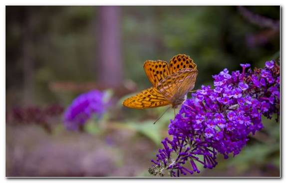 Image Flora Nectar Butterfly Lycaenid Invertebrate