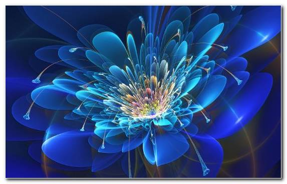 Image Floral Design Graphics Fractal Art Flower Petal