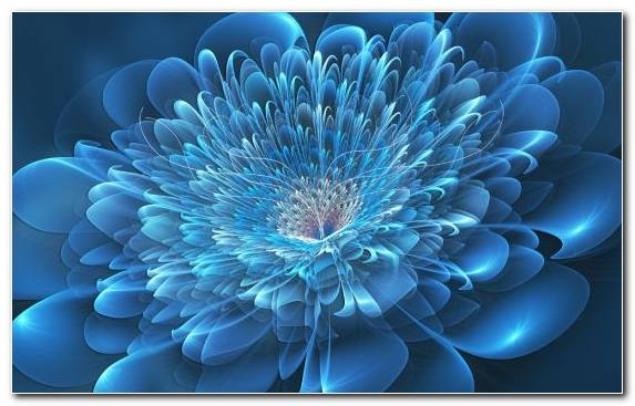 Image Floral Design Petal Graphics Blue Flower