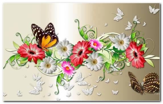 Image Floristry Pollinator Invertebrate Flower Arranging Flower