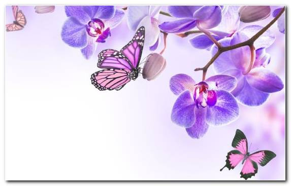 Image Flower Bouquet Lilac Moths And Butterflies Violet Floral Design