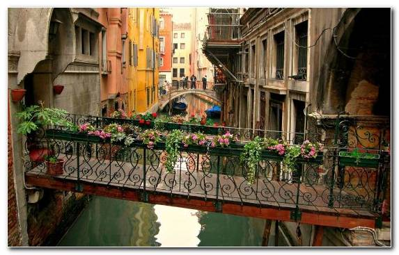 Image Flower Grand Canal Italy Plant Street