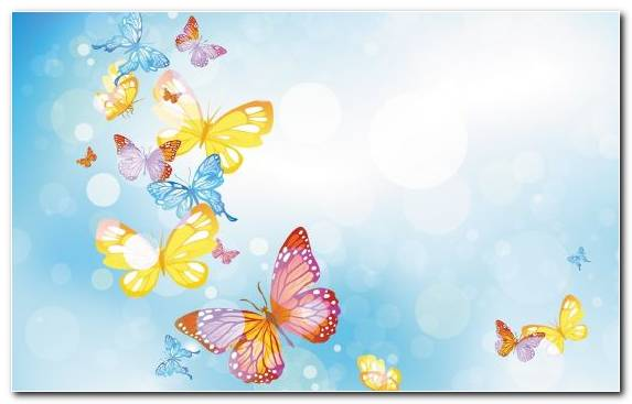 Image Flower Insect Stock Illustration Sky Monarch Butterfly