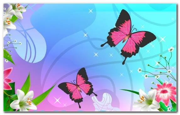 Image Flower Invertebrate Pink Insect Butterfly