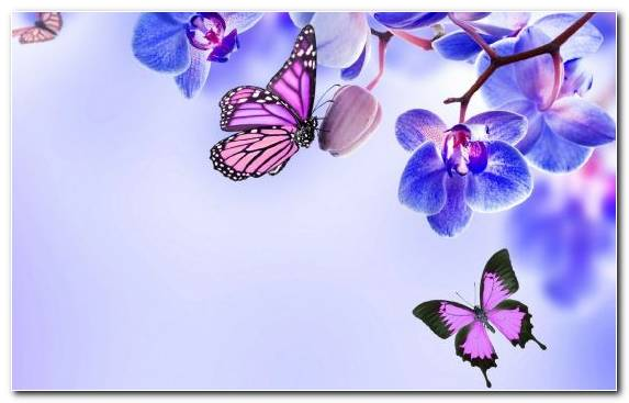 Image Flower Moths And Butterflies Pollinator Illustration Lilac