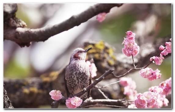 Image Flower Parrot Beak Blossom Flora