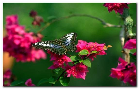 Image flower petal butterfly idea insect