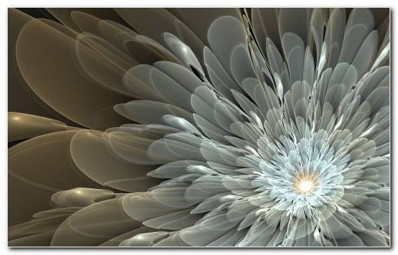 Image Flower Plant Art Symmetry Fractal