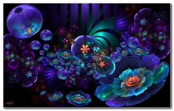Image Flower Rose Purple Neon Lighting Petal
