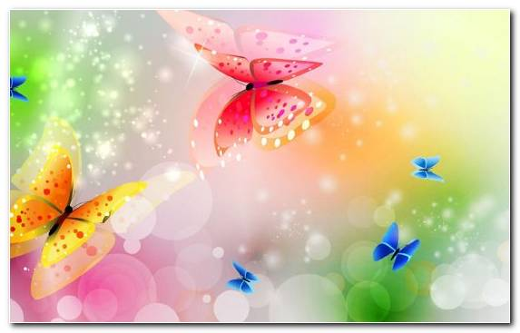 Image Flower Sky Butterfly Pollinator Insect