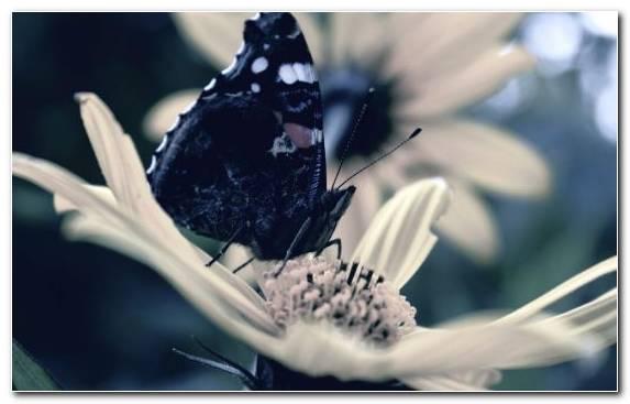 Image flower spring petal Lepidoptera pollinator