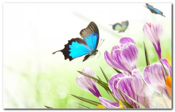 Image Flowering Plant Moths And Butterflies Butterfly Brush Footed Butterfly Flower