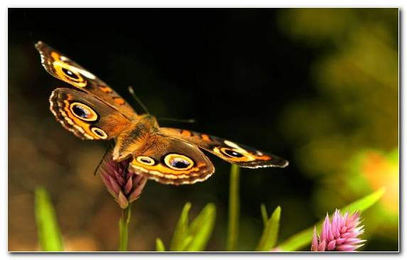 Image Fly Moths And Butterflies Insect Ant Butterfly