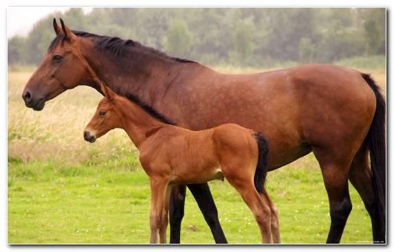 Image Foal Appaloosa Mane Pasture Mare