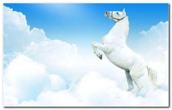 Image Foal Sky Mare Clouds Arabian Horse