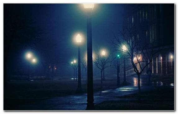 Image fog tree light fixture lighting street light